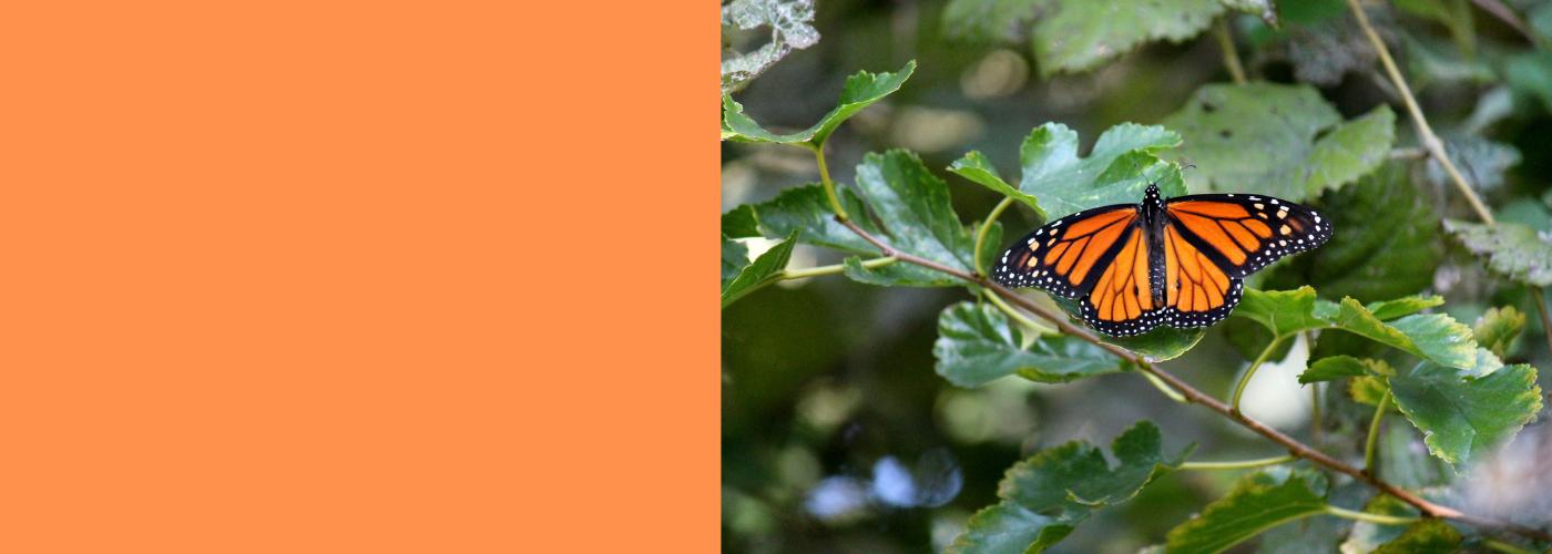 Monarch Symbolic Migration